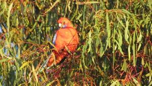 Bird enjoying morning warmth.